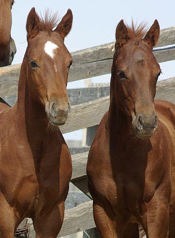 Rocking I Foals, 2012