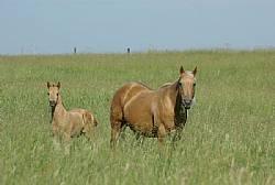 Rocking I Foals 2011