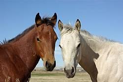 Rocking I Foals 2013