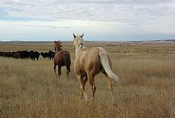 Rocking I Quarter Horses, 2013