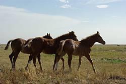 Rocking I Foals 2012