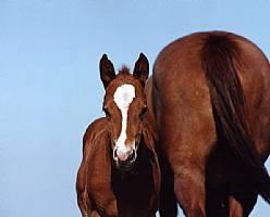 Rocking I Foals